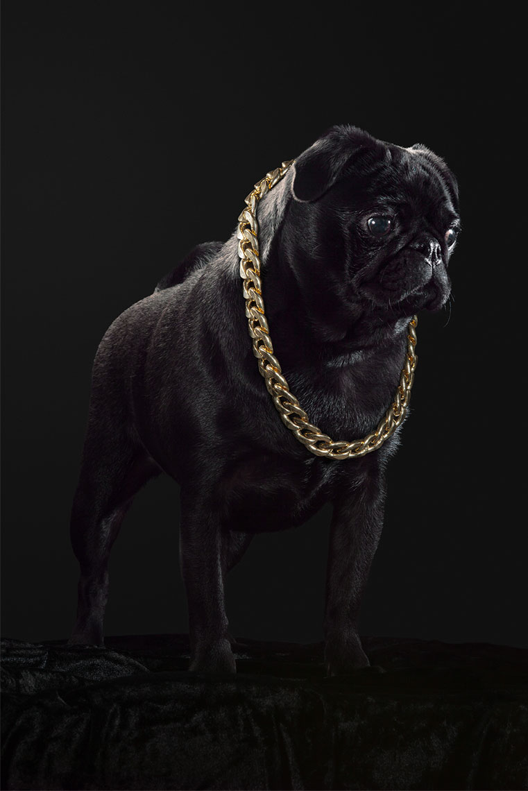 A_Pugs_Life_Mabel